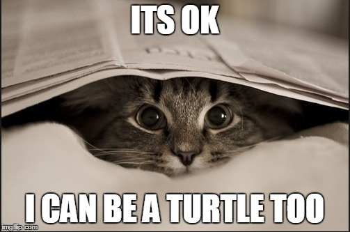ITS OK I CAN BE A TURTLE TOO | image tagged in memes,cats,cute cat | made w/ Imgflip meme maker