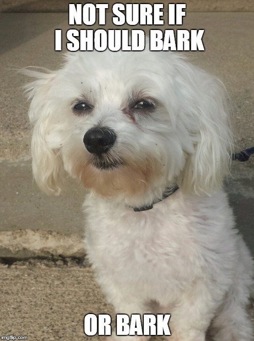 NOT SURE IF I SHOULD BARK OR BARK | image tagged in suspicious dog | made w/ Imgflip meme maker