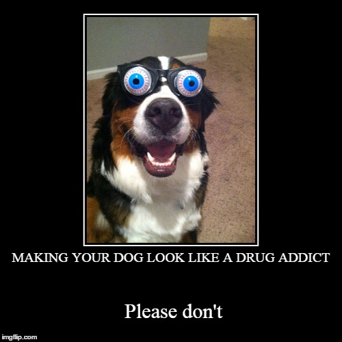 MAKING YOUR DOG LOOK LIKE A DRUG ADDICT | Please don't | image tagged in funny,demotivationals | made w/ Imgflip demotivational maker