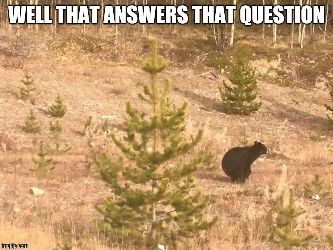 WELL THAT ANSWERS THAT QUESTION | image tagged in bear,woods | made w/ Imgflip meme maker