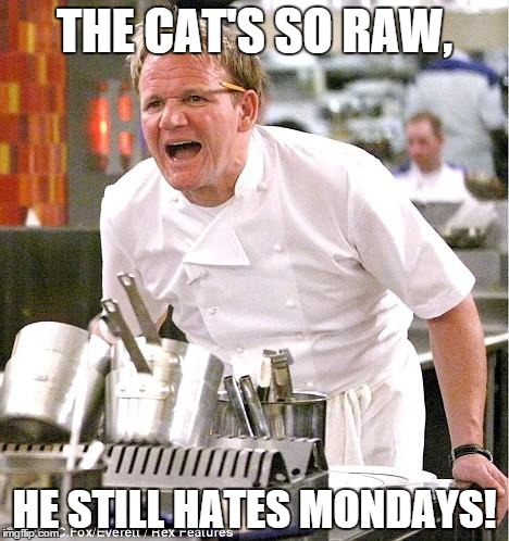 Chef Gordon Ramsay | THE CAT'S SO RAW, HE STILL HATES MONDAYS! | image tagged in memes,chef gordon ramsay | made w/ Imgflip meme maker