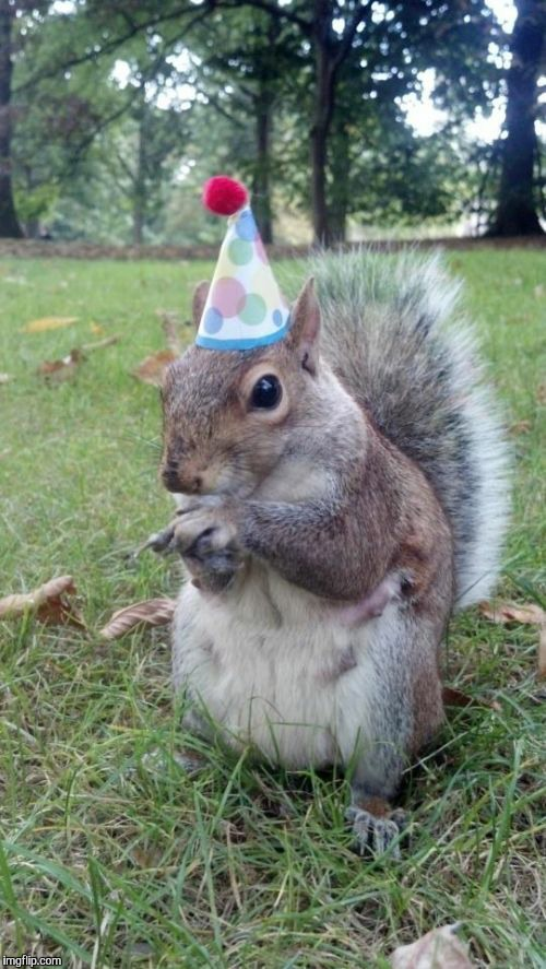 Super Birthday Squirrel | image tagged in memes,super birthday squirrel | made w/ Imgflip meme maker