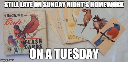 STILL LATE ON SUNDAY NIGHT'S HOMEWORK ON A TUESDAY | image tagged in tuesday,homework,slacker,late | made w/ Imgflip meme maker