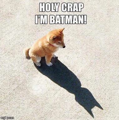 Batman puppy  | image tagged in puppy,batman | made w/ Imgflip meme maker