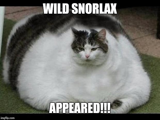 fat cat 2 | WILD SNORLAX APPEARED!!! | image tagged in fat cat 2 | made w/ Imgflip meme maker