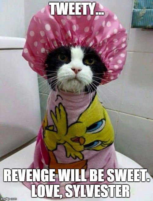 TWEETY... REVENGE WILL BE SWEET.   LOVE, SYLVESTER | image tagged in shower cat | made w/ Imgflip meme maker