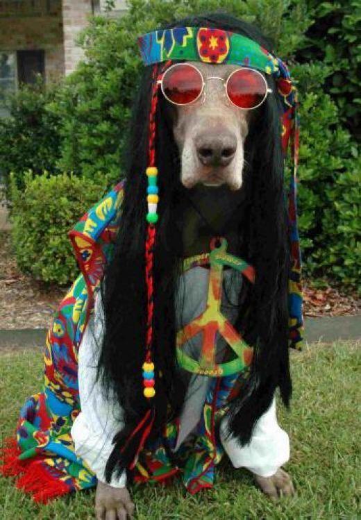 qijyo hippie dog blank template imgflip