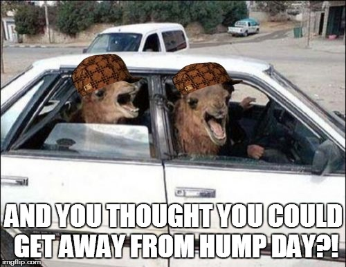 This a nightmare! | AND YOU THOUGHT YOU COULD GET AWAY FROM HUMP DAY?! | image tagged in memes,scumbag,hump day camel | made w/ Imgflip meme maker