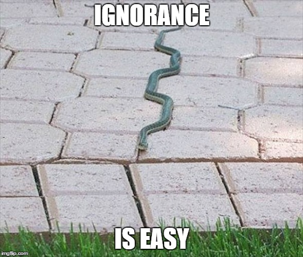 IGNORANCE IS EASY | image tagged in easy,is,ignorance | made w/ Imgflip meme maker