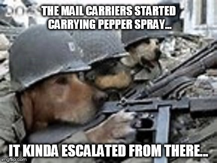 Doggun | THE MAIL CARRIERS STARTED CARRYING PEPPER SPRAY... IT KINDA ESCALATED FROM THERE... | image tagged in funny dogs | made w/ Imgflip meme maker