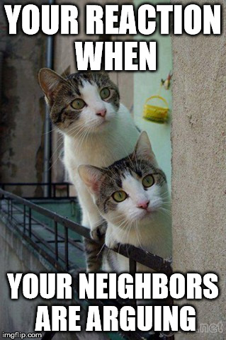 Your reaction when... | YOUR REACTION WHEN YOUR NEIGHBORS ARE ARGUING | image tagged in cats,reaction | made w/ Imgflip meme maker
