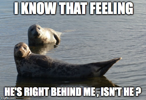 I KNOW THAT FEELING HE'S RIGHT BEHIND ME , ISN'T HE ? | image tagged in seal | made w/ Imgflip meme maker