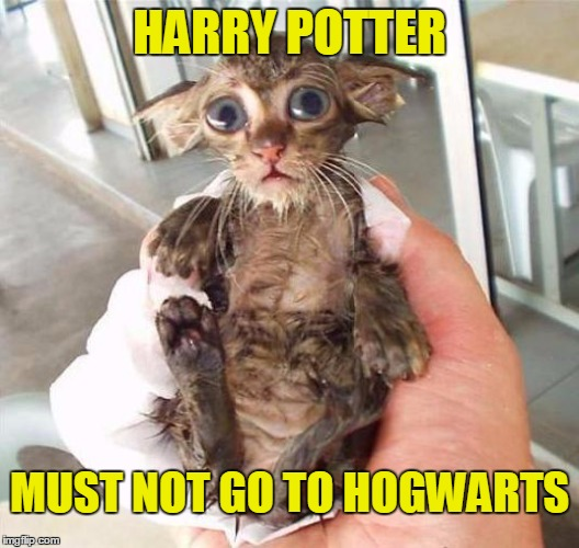 Harry Potter must not go to Hogwarts | HARRY POTTER MUST NOT GO TO HOGWARTS | image tagged in dobby kitten,memes | made w/ Imgflip meme maker