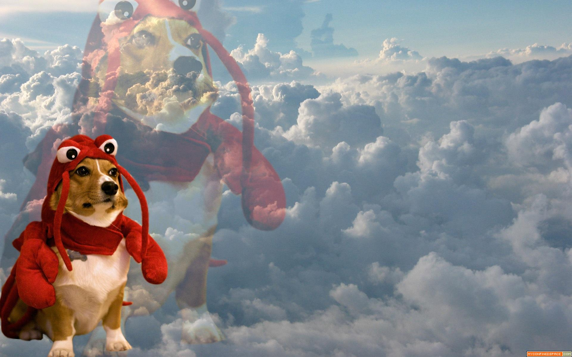 Funny Dog Meme Backgrounds : Lobster dog blank template imgflip