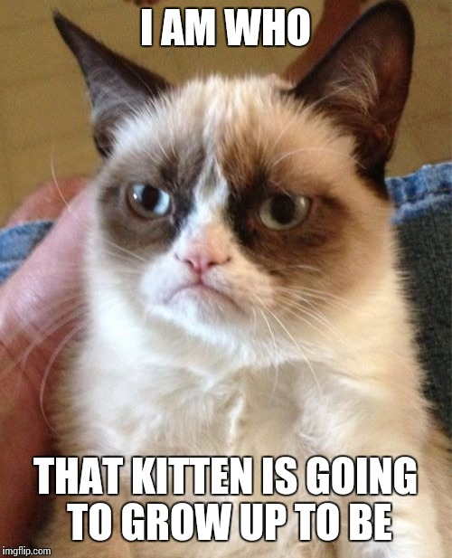 Grumpy Cat Meme | I AM WHO THAT KITTEN IS GOING TO GROW UP TO BE | image tagged in memes,grumpy cat | made w/ Imgflip meme maker