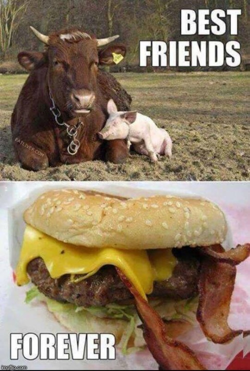 Mmmmmm friendship  | BEST FRIENDS FOREVER | image tagged in cows,lol,funny,memes,pigs,bff | made w/ Imgflip meme maker