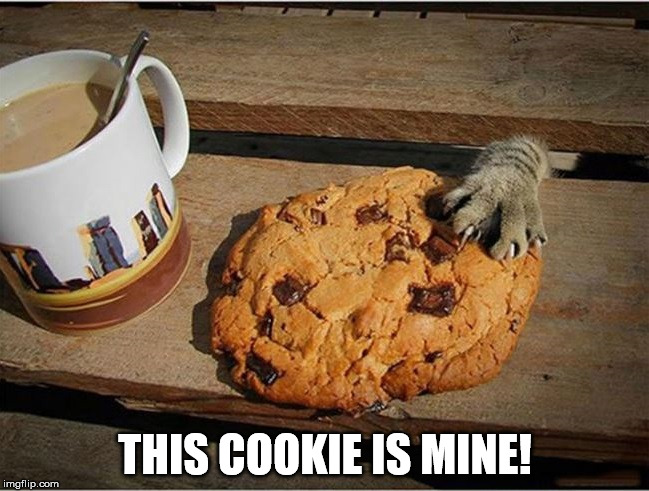 cookie mine cat | THIS COOKIE IS MINE! | image tagged in cookie,cat,bossy cat,food | made w/ Imgflip meme maker
