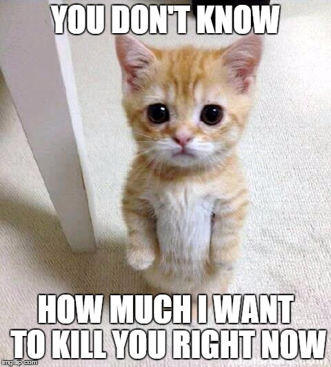 Cute Cat Meme | YOU DON'T KNOW HOW MUCH I WANT TO KILL YOU RIGHT NOW | image tagged in memes,cute cat | made w/ Imgflip meme maker