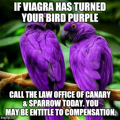IF VIAGRA HAS TURNED YOUR BIRD PURPLE CALL THE LAW OFFICE OF CANARY & SPARROW TODAY. YOU MAY BE ENTITLE TO COMPENSATION. | image tagged in birds,purple,lawyers | made w/ Imgflip meme maker