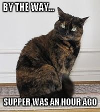 BY THE WAY... SUPPER WAS AN HOUR AGO | image tagged in moobs | made w/ Imgflip meme maker
