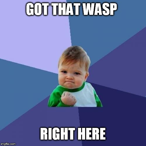 Success Kid Meme | GOT THAT WASP RIGHT HERE | image tagged in memes,success kid | made w/ Imgflip meme maker