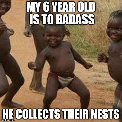 Third World Success Kid Meme | MY 6 YEAR OLD IS TO BADASS HE COLLECTS THEIR NESTS | image tagged in memes,third world success kid | made w/ Imgflip meme maker