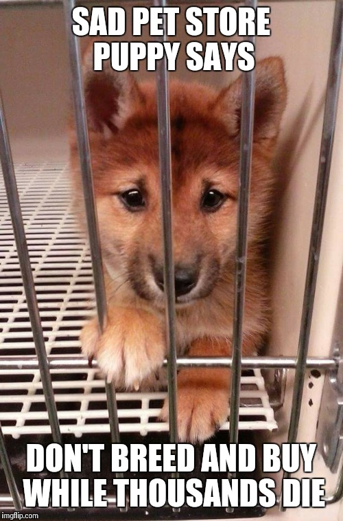 Sad pet store puppy | SAD PET STORE PUPPY SAYS DON'T BREED AND BUY WHILE THOUSANDS DIE | image tagged in pet store,animals,doge,adopt don't shop | made w/ Imgflip meme maker