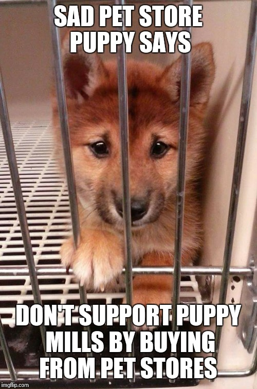 Sad pet store puppy  | SAD PET STORE PUPPY SAYS DON'T SUPPORT PUPPY MILLS BY BUYING FROM PET STORES | image tagged in pet store,doge,puppy mills | made w/ Imgflip meme maker