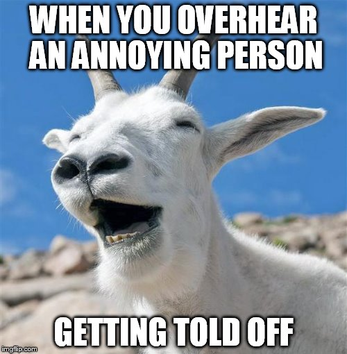 Laughing Goat Meme | WHEN YOU OVERHEAR AN ANNOYING PERSON GETTING TOLD OFF | image tagged in memes,laughing goat | made w/ Imgflip meme maker