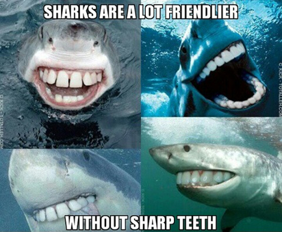 image tagged in funny,animals,bizarre/oddities,sharks