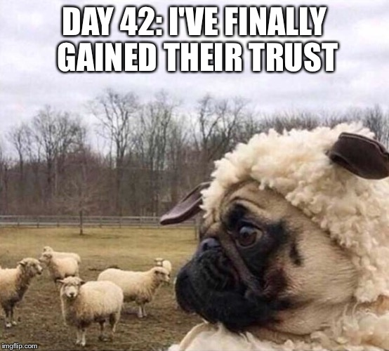 They Have No Idea | DAY 42: I'VE FINALLY GAINED THEIR TRUST | image tagged in imposter dog,funny memes,funny,memes,dogs | made w/ Imgflip meme maker