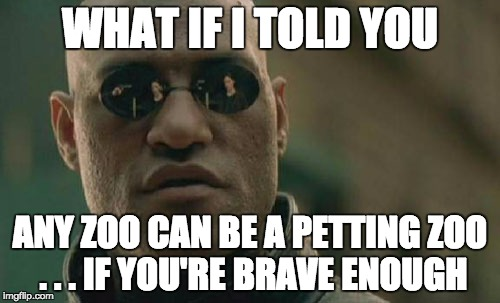 Matrix Morpheus Meme | WHAT IF I TOLD YOU ANY ZOO CAN BE A PETTING ZOO . . . IF YOU'RE BRAVE ENOUGH | image tagged in memes,matrix morpheus | made w/ Imgflip meme maker