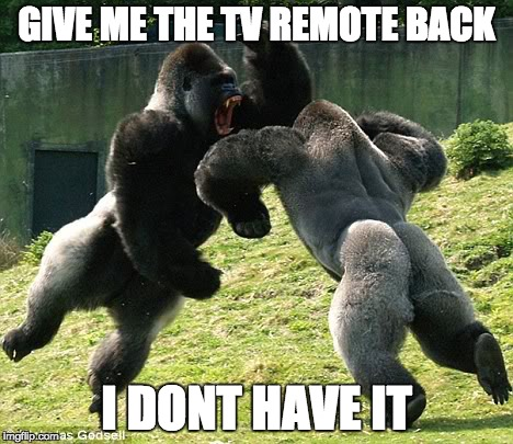 gorillas fight over things - Imgflip