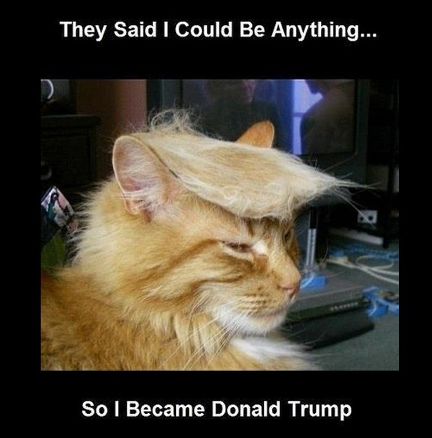 Donald Trump cat | image tagged in funny,memes,animals,cats,donald trump