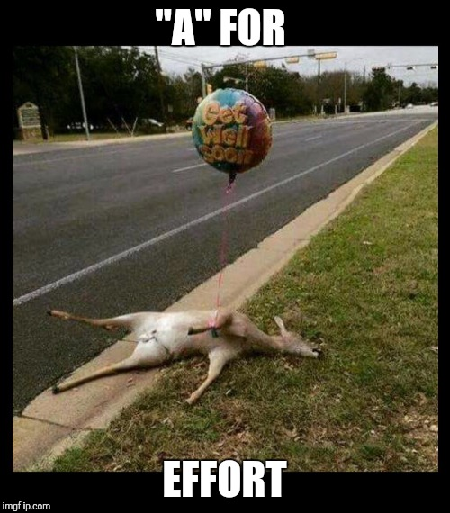"""A"" FOR EFFORT 