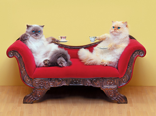 Cats On Sofa Meme Generator Imgflip