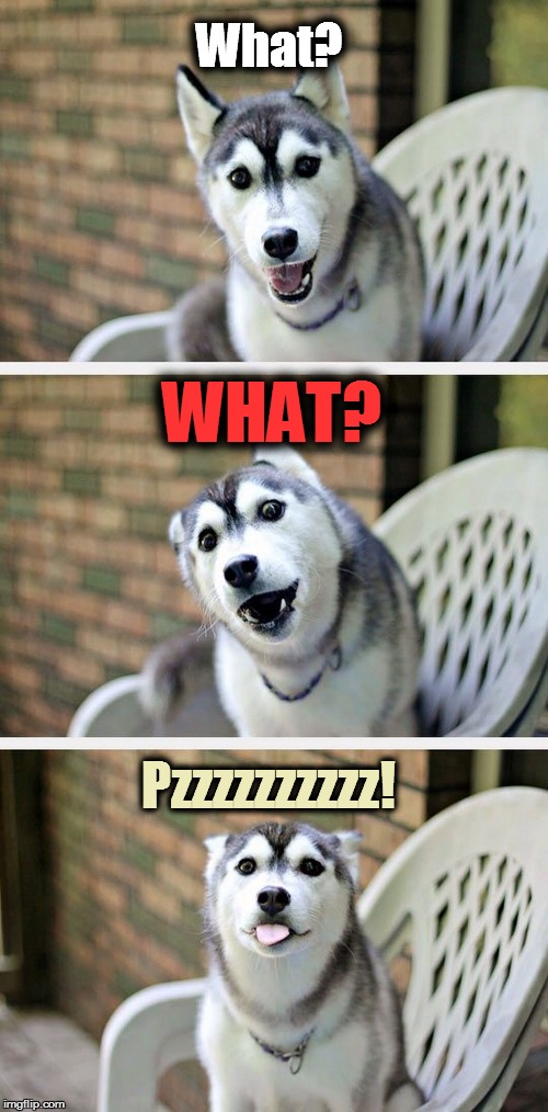 Bad Pun Dog 2 | What? Pzzzzzzzzzz! WHAT? | image tagged in bad pun dog 2 | made w/ Imgflip meme maker