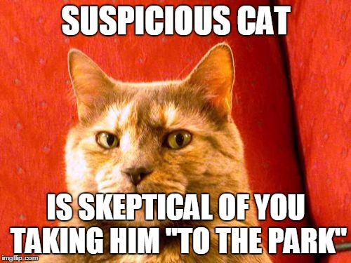 "Suspicious Cat Meme | SUSPICIOUS CAT IS SKEPTICAL OF YOU TAKING HIM ""TO THE PARK"" 