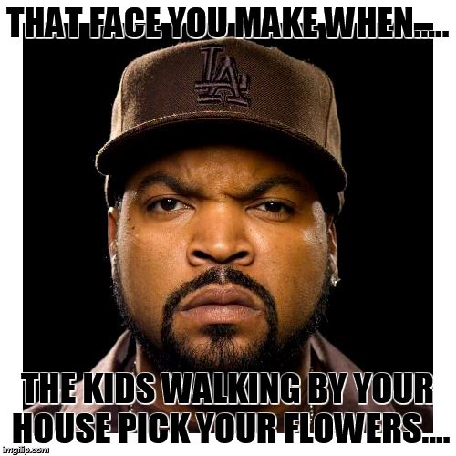 THAT FACE YOU MAKE WHEN..... THE KIDS WALKING BY YOUR HOUSE PICK YOUR FLOWERS.... | image tagged in ice cube,kids,neighbors,flowers | made w/ Imgflip meme maker