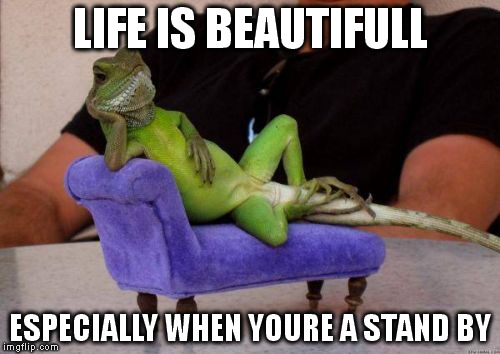 standy by | LIFE IS BEAUTIFULL ESPECIALLY WHEN YOURE A STAND BY | image tagged in memes,sassy iguana | made w/ Imgflip meme maker
