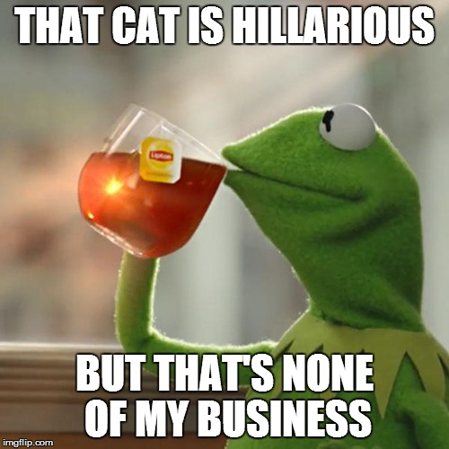 But Thats None Of My Business Meme | THAT CAT IS HILLARIOUS BUT THAT'S NONE OF MY BUSINESS | image tagged in memes,but thats none of my business,kermit the frog | made w/ Imgflip meme maker