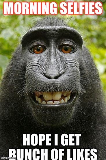 monkey selfie - Imgflip