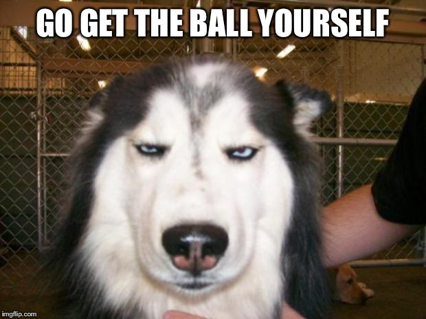 Annoyed Dog | GO GET THE BALL YOURSELF | image tagged in annoyed dog | made w/ Imgflip meme maker