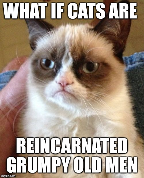 Grumpy Cat Meme | WHAT IF CATS ARE REINCARNATED GRUMPY OLD MEN | image tagged in memes,grumpy cat | made w/ Imgflip meme maker