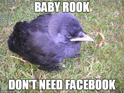 BABY ROOK DON'T NEED FACEBOOK | made w/ Imgflip meme maker