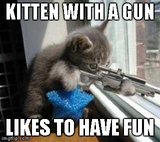Cat Sniper | KITTEN WITH A GUN LIKES TO HAVE FUN | image tagged in cat sniper | made w/ Imgflip meme maker