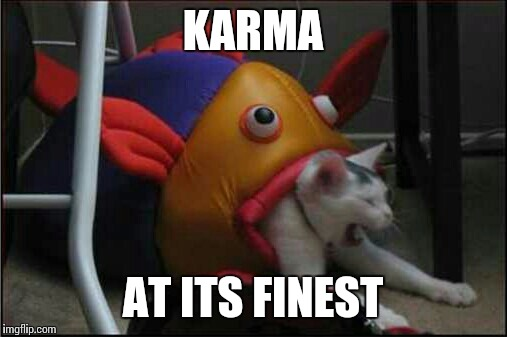 Yup, pretty much how it goes | KARMA AT ITS FINEST | image tagged in memes,funny,cat,fish,karma | made w/ Imgflip meme maker