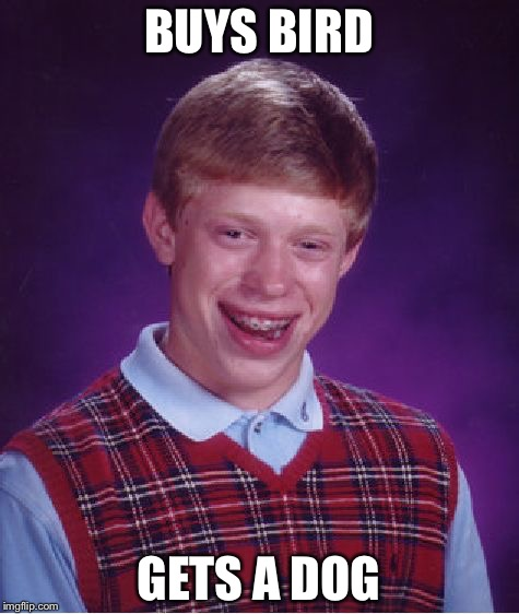 Bad Luck Brian Meme | BUYS BIRD GETS A DOG | image tagged in memes,bad luck brian | made w/ Imgflip meme maker