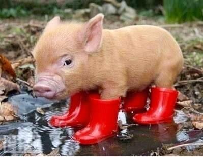Rain Boots Template | Rain Boots Pig Blank Template Imgflip