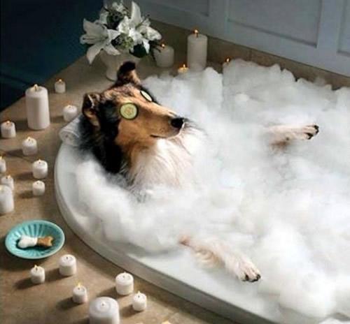 rtw90 dog bath blank template imgflip